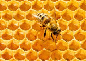 150721_sci_hex-honeycomb-jpg-crop-promo-xlarge2